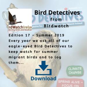 Bird Detectives