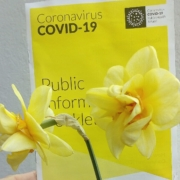 Daffodils and COVID-19 booklet