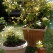 Selection of big and small green plants