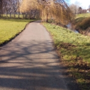 Sunny path beside a river and a weeping willow tree