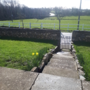 Narrow pathway to front gate with 2 daffodils growing