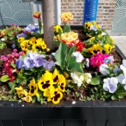 Planter with selection of colourful flowers