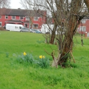 Trees with some daffodils growing in a green area next to a housing estate