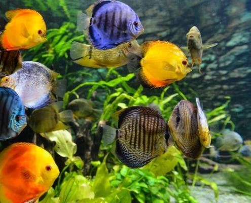 My First Aquarium by Pat